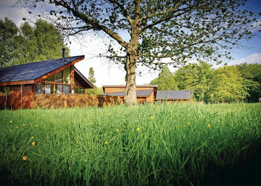 Forest of Dean Golden Oak 1 Meadow Cabin (Pet)