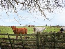 Manor Farm House Cottage