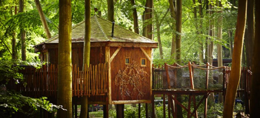Golden Oak Treehouse